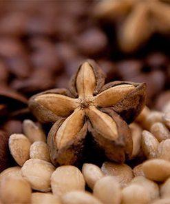 hạt sachi loại 1 của Nutgarden
